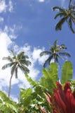 Follaje hermoso en Maui, Hawaii Foto de archivo libre de regalías