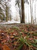 Follaje, hierbas en un paisaje del invierno Fotos de archivo libres de regalías