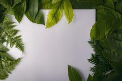 Follaje natural de hojas con el espacio de la copia para el texto Imagen de archivo