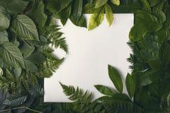 Follaje natural de hojas con el espacio de la copia para el texto Fotos de archivo