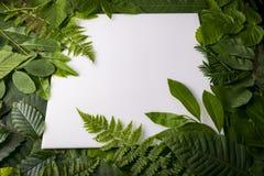 Follaje natural de hojas con el espacio de la copia para el texto Imagenes de archivo
