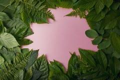 Follaje natural de hojas con el espacio de la copia para el texto Foto de archivo libre de regalías