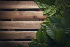 Follaje natural de hojas con el espacio de madera de la copia para el texto Imágenes de archivo libres de regalías
