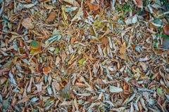 Follaje otoñal, fondo de la licencia de otoño caida fotos de archivo