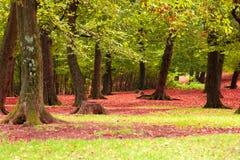 Follaje rojo caido Fotografía de archivo libre de regalías