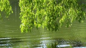 Follaje sobre el lago metrajes