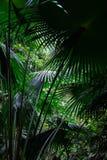 follaje tropical de la palma en selva tropical tropical imágenes de archivo libres de regalías
