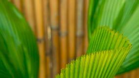 Follaje tropical jugoso verde Primavera o fondo floral del verano almacen de metraje de vídeo