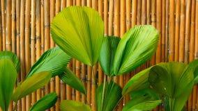 Follaje tropical jugoso verde Primavera o fondo floral del verano metrajes