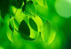 Follaje verde Fotos de archivo libres de regalías