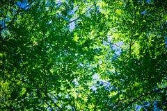 Follaje verde Imágenes de archivo libres de regalías