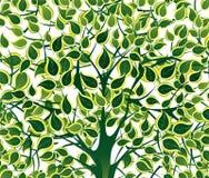 Follaje verde Fotografía de archivo