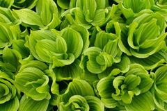 Follaje verde con la precipitación Imagen de archivo