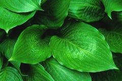 Follaje verde con las gotas de agua foto de archivo