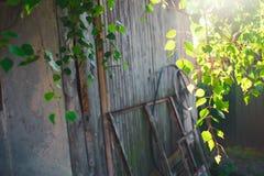 Follaje verde de un árbol de abedul debajo del sol en un día de verano Fotografía de archivo