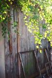 Follaje verde de un árbol de abedul debajo del sol en un día de verano Imágenes de archivo libres de regalías