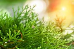 Follaje verde del verano o de la primavera en el sol Fotos de archivo