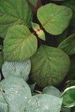 Follaje verde enorme desde arriba Imagenes de archivo