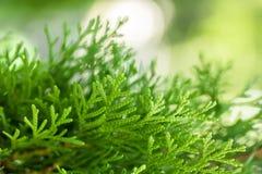 Follaje verde hermoso Imagenes de archivo