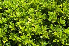 Follaje verde vibrante Foto de archivo