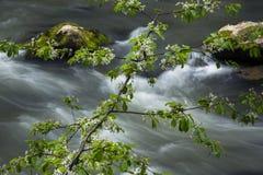 Follaje verde vibrante en el bosque en primavera Imágenes de archivo libres de regalías