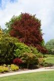 Follaje verde y rojo enorme de árboles y de arbustos en Calverley Grou Foto de archivo libre de regalías