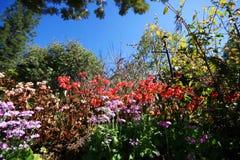 Follaje y cielo azul Imagenes de archivo