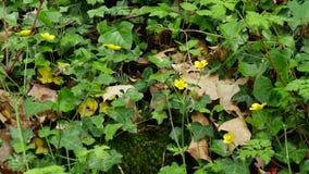 Follaje y pequeñas flores amarillas almacen de video