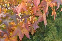 Folliage del otoño Fotografía de archivo