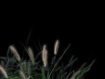 Folliage en negro Fotos de archivo libres de regalías
