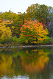 Folligh fall colors trees reflection autumn winter fall nature travel tourism scenic love fresh water lake cold Royalty Free Stock Photo