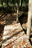 Follow the Boardwalk. On a fall day, a narrow winding boardwalk is leading us into the woods Stock Photography