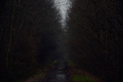 Follow the dark road. A dark road through the forest, follow it to enlightenment Stock Photos