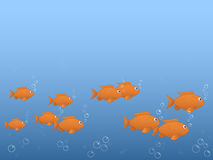 Follow the fish. Fish blowing bubbles in the water Stock Photography
