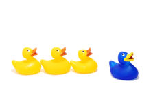 Follow the leader. Group of rubber ducks following the blue one - isolated on white background Stock Photos