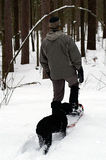 Follow the Leader. Following the leader in deep snow is a smart way to conserve energy when you're a quadruped and don't have snowshoes Stock Images