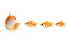 Follow the leader royalty free stock photography