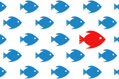 Follow the leader. fish close-up concept Royalty Free Stock Photography