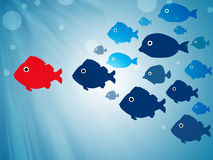 Follow leader. Group of fish following leader Stock Image