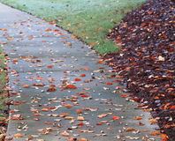 Follow the Leaf Road. Curved sidewalk with wet leaves covering the walk Royalty Free Stock Photography