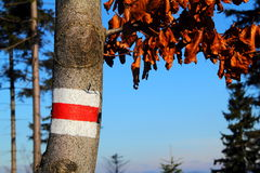 Follow me. Beech tree with mountain trail sign. Autumn  brown leaves. Track in Beskid Śląski, Poland Stock Photo