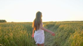 Follow me. Happy couple holding hands, running on golden wheat field and having fun outdoors, Couple walking on meadow stock video
