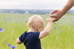 Follow me. Little boy walking in the field of knapweeds. Concept. royalty free stock image