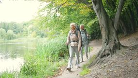 Nice retired couple of tourists walking in the forest. Follow me. Pleasant retired couple of tourists trying Nordic walking and going in the forest along the stock video