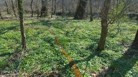 Follow the Orange Moss Stock Images