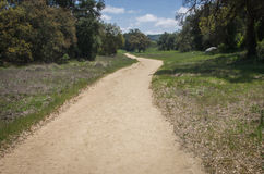 Follow the Path. Dirt path with bordered by green grass and trees with blue skies and clouds Stock Photography