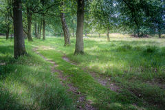 Follow the path. Green path in a forest in the Netherlands Royalty Free Stock Image