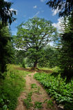 Follow the path to the lonely tree of life Stock Photography