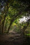 Follow the path. Tree lined path up hill Stock Image