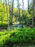 Follow The River. The river, follow, nature, trees, forest stock photography